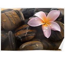 Frangipani and polished stone Poster