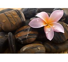 Quot Frangipani And Polished Stone Quot By Afby Redbubble