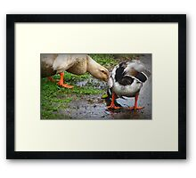 Better Than Pond Water Framed Print