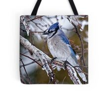 Blue Jay on Ice Covered Branch - Ottawa, Ontario Tote Bag