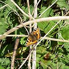 small tortoise shell by brucemlong