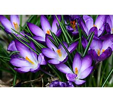 Finally It's Spring! Photographic Print