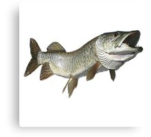 Toothy muskie Canvas Print