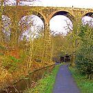 Almondell Viaduct III by Tom Gomez