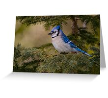 Blue Jay - Algonquin Park, Ontario Greeting Card