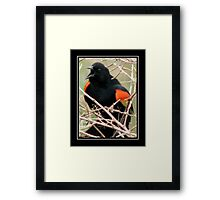 Attracting His Harem Framed Print