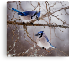 Blue Jays - Shirley's Bay, Ottawa Metal Print