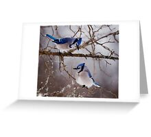 Blue Jays - Shirley's Bay, Ottawa Greeting Card