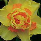 Unusual Daffodil by Mark Wilson
