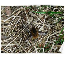 Bee - fly Poster