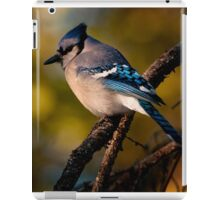 Evening Blue Jay iPad Case/Skin