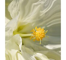 Silken Photographic Print