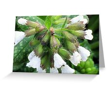 Prickly edges guard the white bells Greeting Card