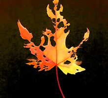 Somebody had Leaf for Lunch – Fire by Mike Solomonson