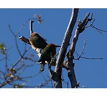 Two Bee Eaters Photographic Print