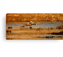 """It's a bird! It's a plane! It's a duck!"" Canvas Print"