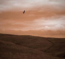 Rolling Prairie by Jordan Nimlos