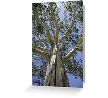 Eucalypt I - Tall Timber series Greeting Card