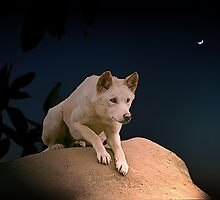 Australian Dingo at Night by Maggiebee