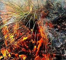 Burning Grass Tree..... by debsphotos