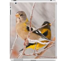 Evening Grosbeak iPad Case/Skin