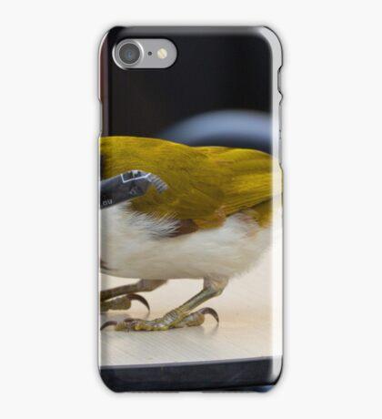 Honey Eater iPhone Case/Skin