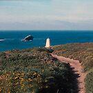 Cliffs above Portreath by georgieboy98