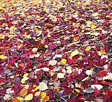 Autumn Quilt: Adelaide Hills, South Australia by Dave Underwood