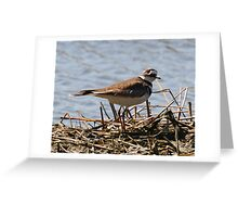 piper or plover Greeting Card