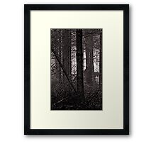 Tangled Undergrowth Framed Print