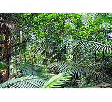 Rainforest Greens Photographic Print