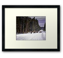 Where the Buffalo Roam Framed Print