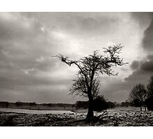 Outstretched Limbs Photographic Print