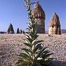 Goreme, Cappadocia Region, Turkey by Craig Scarr