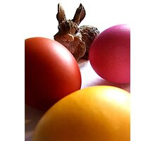 Bunny and Eggs Photographic Print