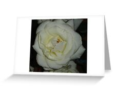 Solo Rose Greeting Card
