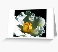 WHITE CAMELIA ~ PALETTE KNIFE OILS ON CANVAS Greeting Card