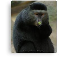 One-Armed Monkey at the Pittsburgh Zoo Canvas Print