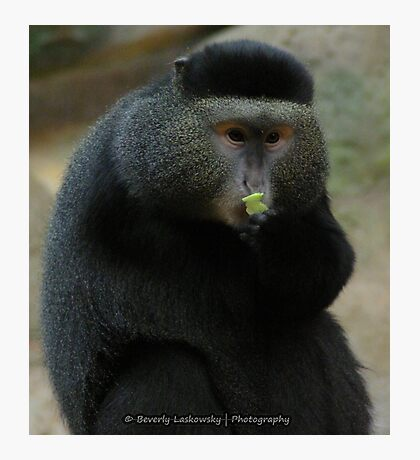 One-Armed Monkey at the Pittsburgh Zoo Photographic Print