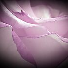 Lavender Rose - Macro  by Sandra Foster