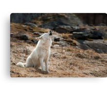 Howling Arctic Wolf Canvas Print