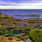 Pittenweem shore by Tom Gomez
