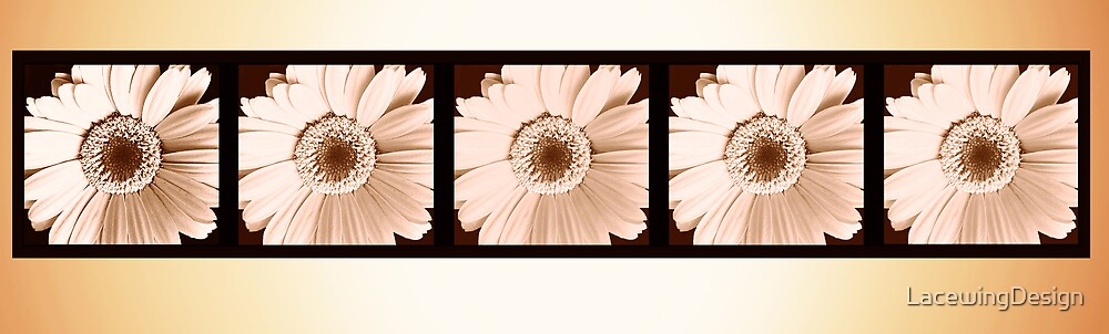 SEPIA COLLECTION ~ GERBERA ~ OILS ON CANVAS FRAMED by LacewingDesign