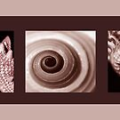 SEPIA COLLECTION ~ SEASHELLS TRIPTYCH ~ PHOTOGRAPHY  by LacewingDesign