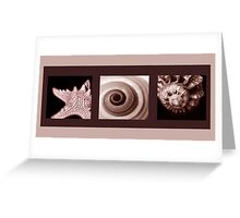 SEPIA COLLECTION ~ SEASHELLS TRIPTYCH ~ PHOTOGRAPHY  Greeting Card