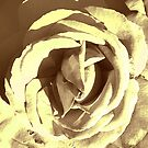 SEPIA COLLECTION ~ SEPIA ROSE #1  by LacewingDesign