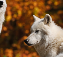 Arctic Wolves Sticker