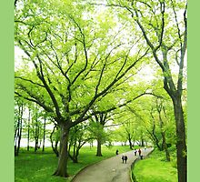 Lush Trees in Central Park NYC by MissCellaneous