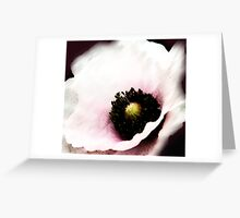 BOTANICAL ~ WHITE POPPY ~ DRY BRUSH AND OILS Greeting Card