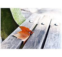 Autumn Leaf on Central Park Bench by MissCellaneous